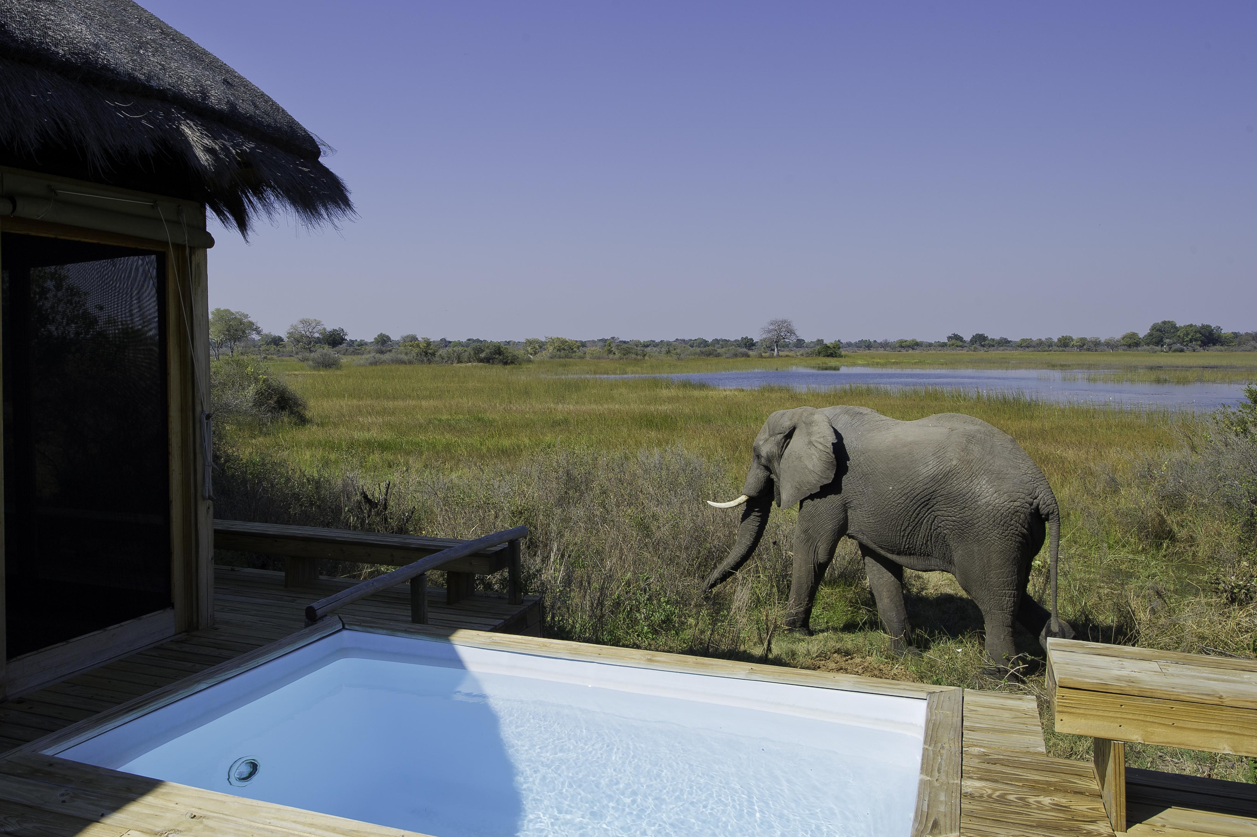 Een bezoeker bij het kamp de Vumbura Plains, Wilderness Safaris.
