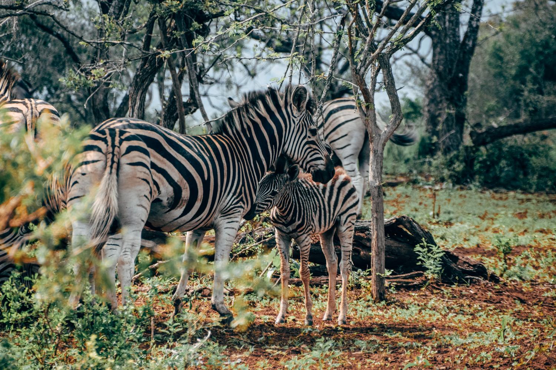 Rangercursus in Somkhanda, Zuid-Afrika
