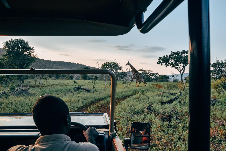 Een giraffe tijdens een sunset drive door het park.